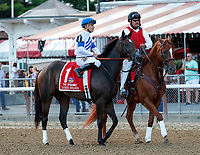 Cassies Dreamer in the post parade as Sippican Harbor (no. 6) wins the Spinaway Stakes (Grade 1), Sep. 1, 2018 at the Saratoga Race Course, Saratoga Springs, NY.  Ridden by  Joel Rosario, and trained by Gary Contessa, Sippican Harbor finished 2 lengths in front of Restless Rider (No. 11).  (Bruce Dudek/Eclipse Sportswire)