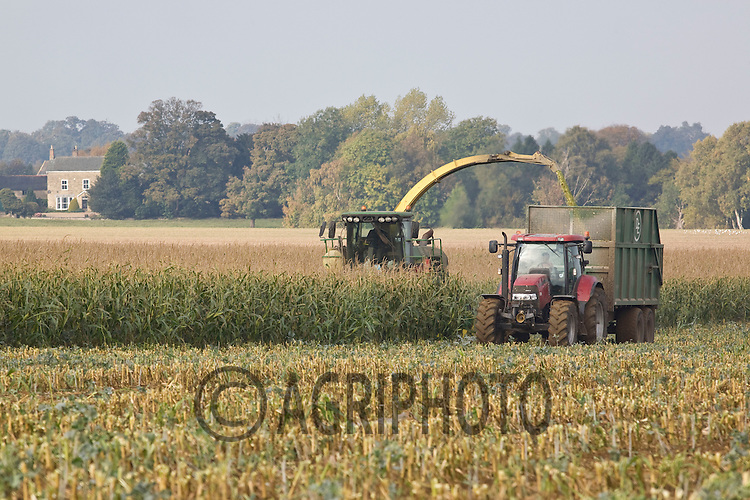 Contractor's forage harvesting maize on a Leicestershire dairy farm