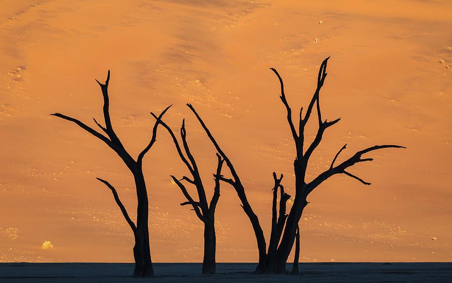 Tree Silhouette Against The Sunlit Dune In The Deadvlei Area, Sossuvlei.