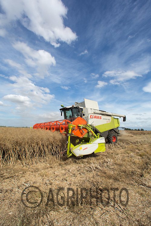 Harvesting Oilseed rape in Lincolnshire<br /> Picture Tim Scrivener 07850 303986<br /> &hellip;.Covering agriculture in the UK&hellip;.