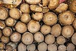 20161012 cut wood tree stumps