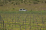 Israel, Shephelah, vineyards in Adulam