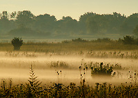 Early morning sunrise light highlights the mist hanging over the grasslands at Springbrook Prairie Forest Preserve, DuPage County, Illinois
