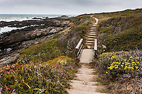 A footpath with rocky shore and ocean to the left and sandy trail ahead, including a wooden footbridge, rustic steps and dirt path along  a rugged coast.