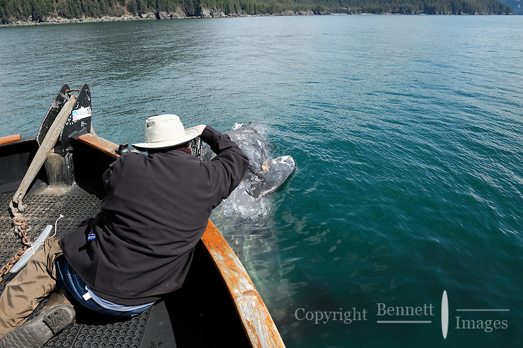 Joe Flyn photographs a dead gray whale (Eschrichtius robustus) from the M/V Auklet that was found floating south of Glacier Island in Prince William Sound, Southcentral Alaska on a spring day in early May. MR/PR