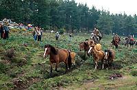 La Valga bei Oia, Curro (Einfangen der Pferde), Galicien, Spanien