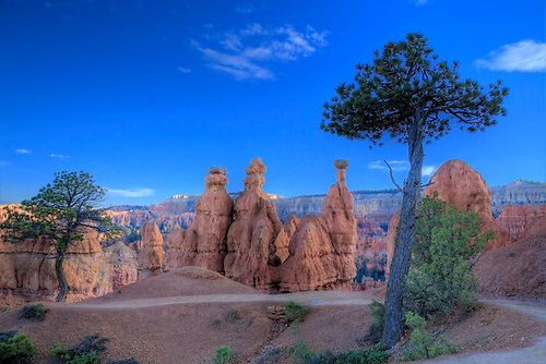 Hoodoos stand out on The Queen's Garden Trail at Bryce Canyon National Park, Utah