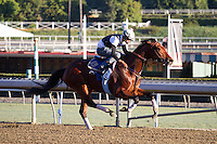 Switch working for trainer John Sadler at Santa Anita Park in Arcadia California