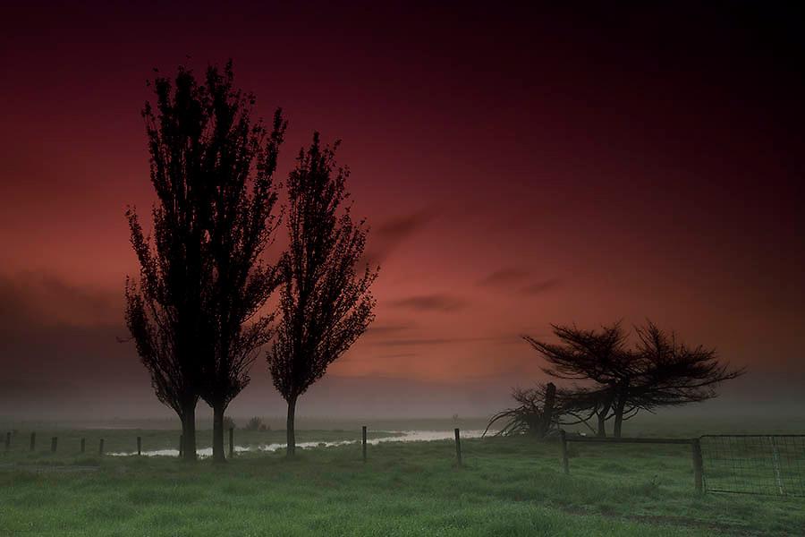 Image Ref: SR008<br /> Location: Yarra Valley<br /> Date of Shot: 16th Nov 2013
