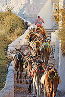 A Guide mule with his flock climbs the stairs of Santorini, Greece