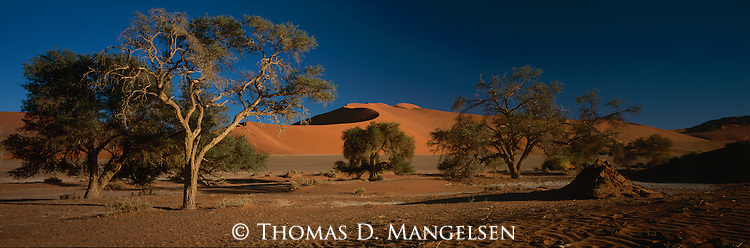 Sand dunes and trees in Sossusvlei National Park, Namibia.