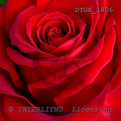 Gisela, FLOWERS, photos, DTGK1806,#F# Blumen, flores, retrato