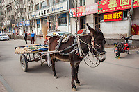 Donkey pulling a cart of vegetables for sale in Datong, China