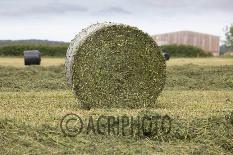 19.5.2020 Round bale of  silage in Rutland <br /> ©Tim Scrivener Photographer 07850 303986<br />      ....Covering Agriculture In The UK....