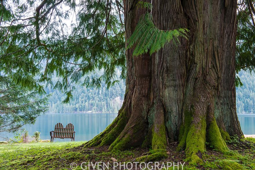 Bench, cedar tree and lake