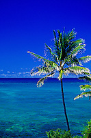 Palm tree with blue sky & blue-green ocean off Lanikai.