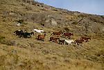 Horses, Patagonia region, Chile