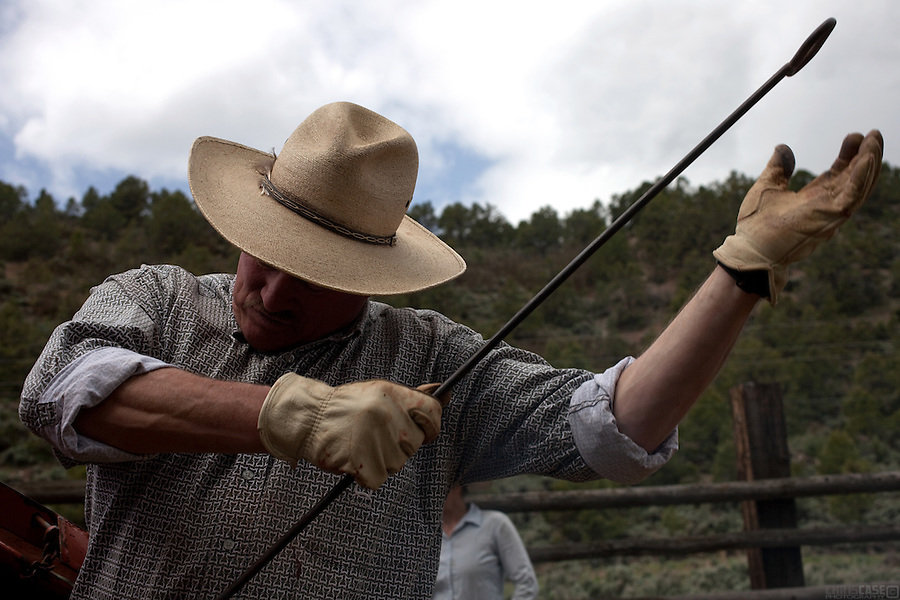 In late May, the calves are branded and vaccinated on Bill Fales' ranch. Fales, owner of Cold Mountain Ranch in Carbondale, Colorado, has been ranching his sliver of land in the Roaring Fork Valley since 1973.