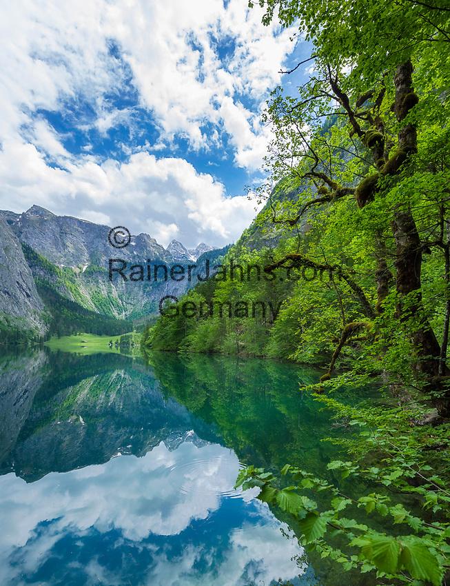 Deutschland, Bayern, Oberbayern, Berchtesgadener Land, am Obersee im Nationalpark Berchtesgaden, am Ende des Sees liegt die Fischunkelalm   Germany, Upper Bavaria, Berchtesgadener Land, at Upper Lake in Berchtesgaden National Park