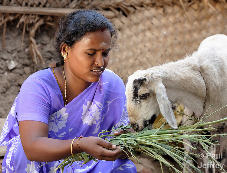 Nina cares for her goats. She is a member of the Ganeapathi self-help group in the Dhobi neighborhood of Madurai, a city in the state of Tamil Nadu in southern India.