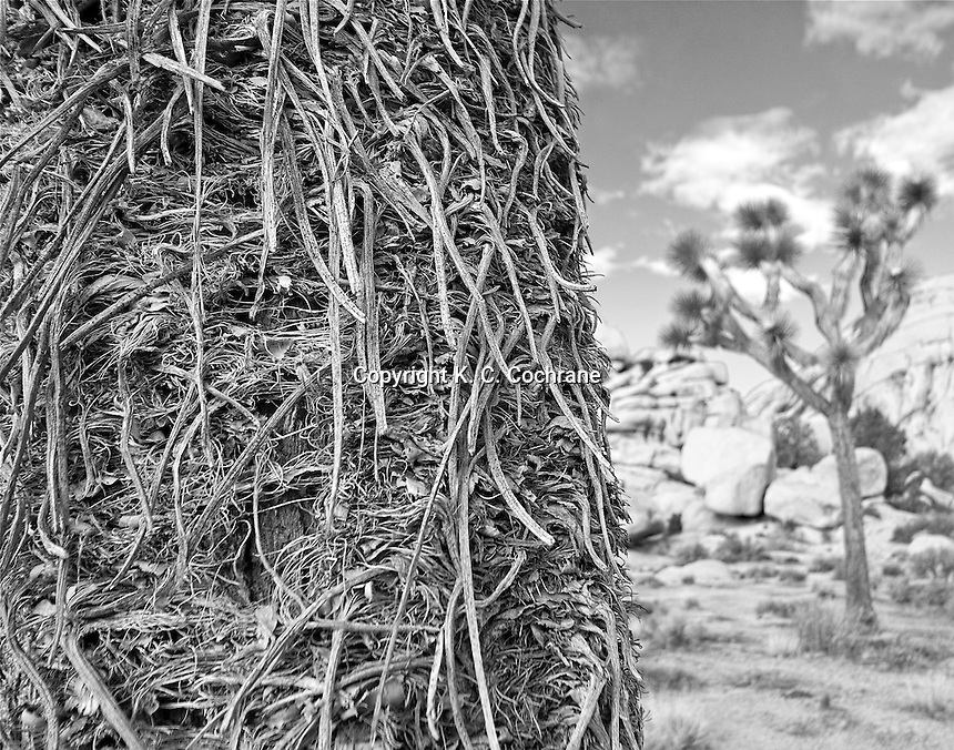 &quot;Fringe&quot;<br />