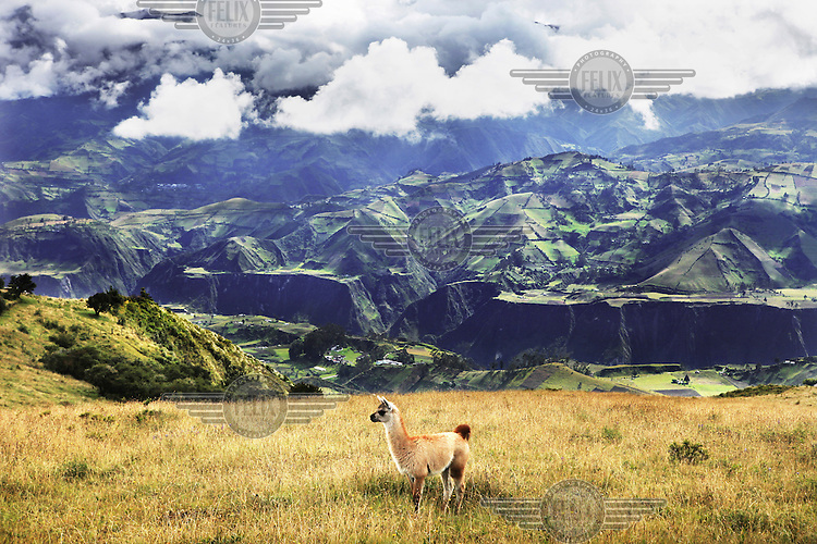 A view over the Ecuadorian Andes region also known as La Sierra and which includes the Andes Mountains.