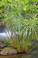 Tropical plants and waterfall. Maui. Hawaii