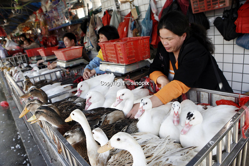 A woman tends to her ducks in the Futian agriculture and produce market.<br /> 08 February, 2007.<br /> Shenzhen, China