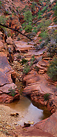 999400012 panoramic view of a small creek flowing down slickrock near the east entrance to zion national park utah