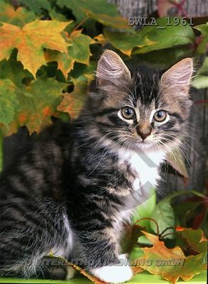 Carl, ANIMALS, photos, kitten, leaves(SWLA1961,#A#) Katzen, gatos