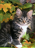 Carl, ANIMALS, photos, kitten, leaves(SWLA1961,#A#) Katzen, gatos