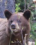 Teton bears 2018