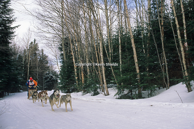 Dogsled race near Saddleback Ski Area, Dallas Plantation, Maine, USA