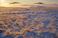 Frosted grasslands<br />