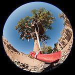 Shoe tree (cottonwood), red shoe, Middlegate, Nev., along US 50