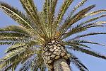 Palm Tree in Laguna Beach, California.