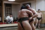 Tokyo, April 26 2013 - Egyptian wrestler Osunaarashi Kintarou (Abdelrahman Ahmed Shaalan) training at Otakebeya sumo stable.