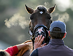 LOUISVILLE, KENTUCKY - APRIL 29: Omaha Beach, trained by Richard Mandella, gets a bath after exercising in preparation for the Kentucky Derby at Churchill Downs in Louisville, Kentucky on April 29, 2019. John Voorhees/Eclipse Sportswire/CSM