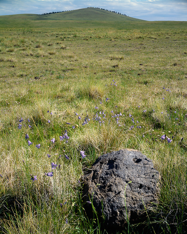 Grasslands along the shore of Big Lake; Apache-Sitgreaves National Forest, AZ