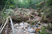 Just below the Cedar Brook crossing along the Pemi East Side Trail piles of trees clog Cedar Brook in the Pemigewasset Wilderness of Lincoln, New Hampshire USA. Flash floods from Tropical Storm Irene in 2011 dragged these trees down the brook to this location. This tropical storm / hurricane caused destruction along the East coast of the United States and the White Mountain National Forest of New Hampshire was officially closed during the storm.