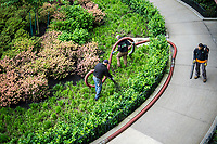 Workers pump mulch into the plantings at the entrance to an apartment building in in Chelsea in New York on Tuesday, May 23, 2017. (© Richard B. Levine)