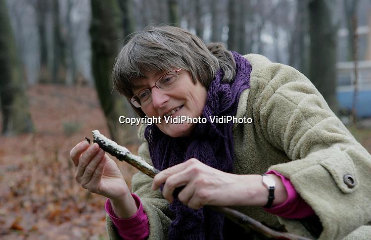 Foto: VidiPhoto..EDE - Manager Janneke Hoekstra op zoek naar paddestoelen in het bos bij Ede.