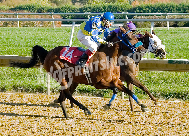 Annies Got Agun LZP winning at Delaware Park on 10/22/12
