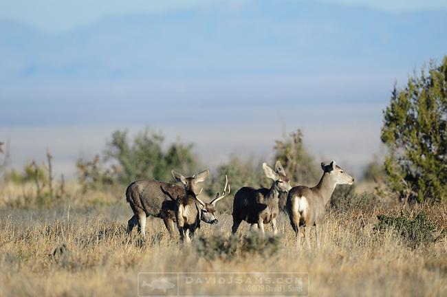 El Escondido Ranch, Mafra Texas