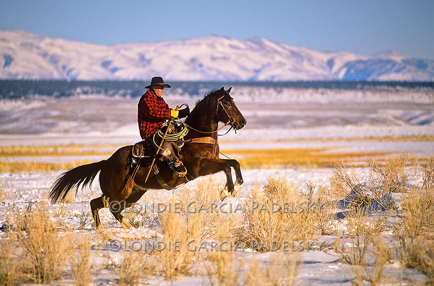 Cowboy rides horse over thawing creek. Winter in the Eastern SIerra, California