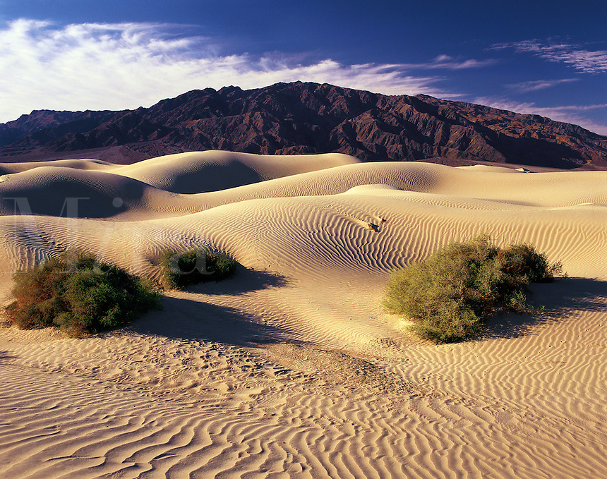 Rolling sand-dunes in early morning light and distant Panamint Mountains, Death Valley, California, US