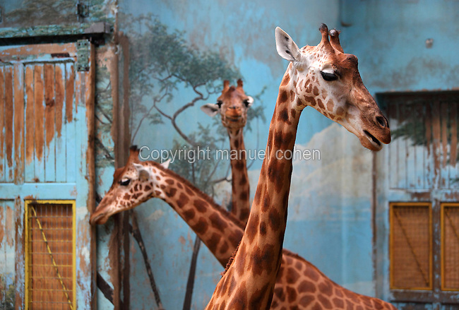 Giraffes in enclosure with fresco, Parc Zoologique de Paris, or Zoo de Vincennes, (Zoological Gardens of Paris, also known as Vincennes Zoo), 1934, by Charles Letrosne, 12th arrondissement, Paris, France. Actually closed to the public for renovation works. The Zoo is scheduled to re-open in April 2014. Picture by Manuel Cohen