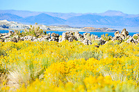Sept. 5, 2010 - Mono Lake, California, U.S. - Mono Lake is a majestic body of water covering about 70 square miles. It is an ancient lake, over 1 million years old -- one of the oldest lakes in North America. It has no outlet and no fish; instead it is home to trillions of brine shrimp and alkali flies. (Photo by Alan Greth/ZUMA Press)