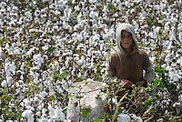 TURKEY, Asmali, near Adana, syrian refugees from Kobane harvest cotton by hand for low wages for a turkish farmer, they have fled from Kobani four weeks ago and camp on the farm in tents / TUERKEI, Asmali, bei Adana, syrische Fluechtlinge aus Kobane ernten Baumwolle per Hand fuer geringen Lohn fuer einen tuerkischen Farmer, sie sind aus Kobane vor 4 Wochen gefluechtet und leben auf der Farm in Zelten aus Planen
