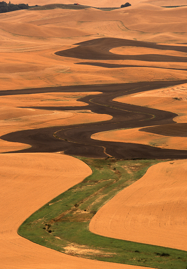 A curvy pattern is seen cut into the fields of the Palouse of Eastern Washington State during harvest season.